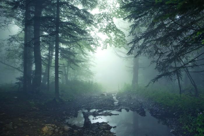 Nálepka Pixerstick Fantasy lesní - Lesy