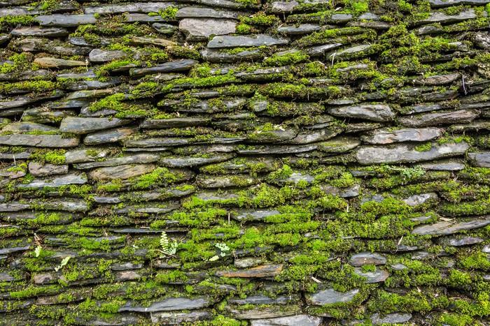 Extreem Fotobehang Stenen muur met groene mos • Pixers® - We leven om te  DR95