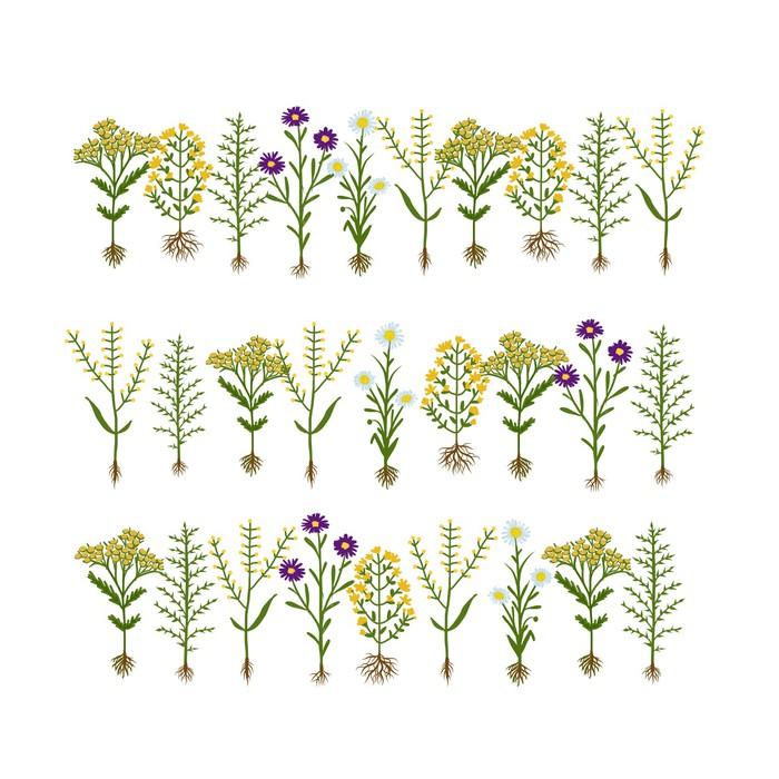 fototapete herbarium blumen mit wurzeln skizze f r ihr design pixers wir leben um zu. Black Bedroom Furniture Sets. Home Design Ideas