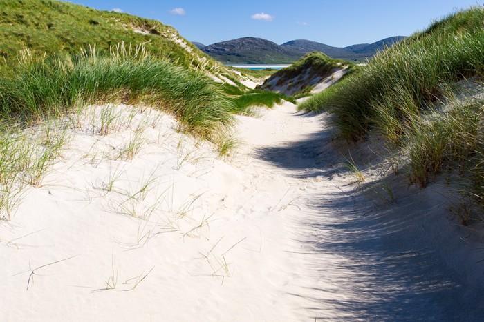 Vinylová Tapeta Slunečné pobřeží s písečnými dunami, ve vysoké trávě a modrou oblohu - Prázdniny