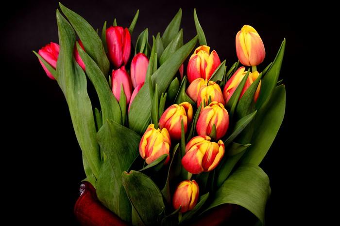 Vinylová Tapeta Oranžová, žlutá, červená Tulipány - Květiny