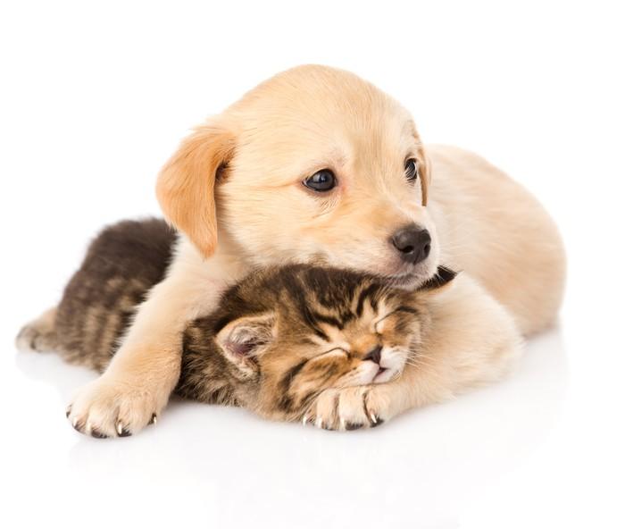 Fototapet Barn Hundvalp Och Liten Kattunge Tillsammans Isolerad På Vit Bac U2022 Pixers U00ae Vi Lever