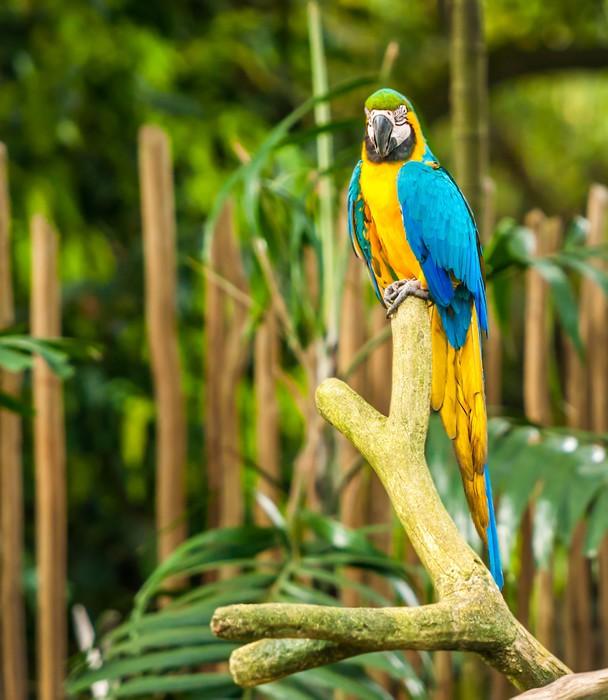 Vinylová Tapeta Exotické papoušci sedí na větvi, volně žijících živočichů - Témata