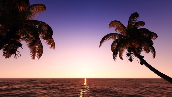 Vinylová Tapeta Kokosové ořechy na pláži - Nebe