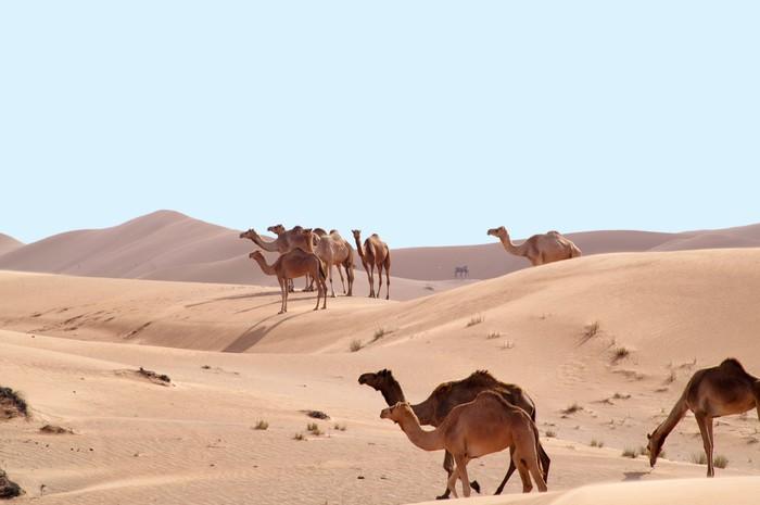 Vinylová Tapeta Velbloudi v poušti 4 - Střední Východ
