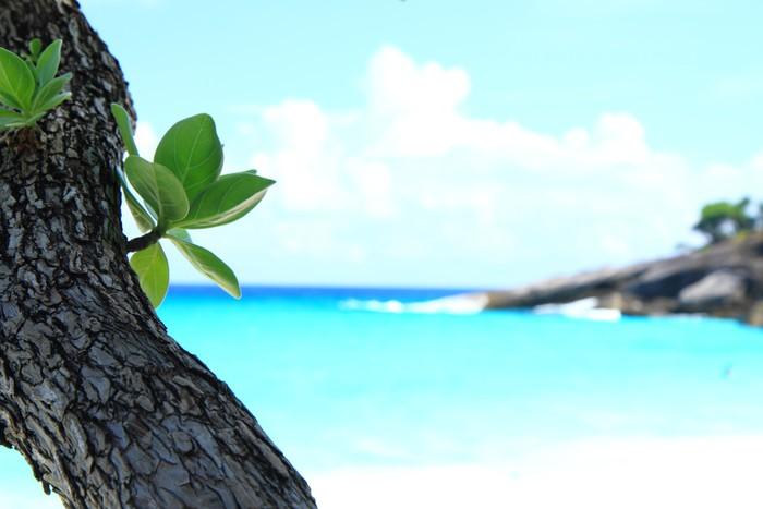 Vinylová Tapeta Leaf u moře - Pozadí
