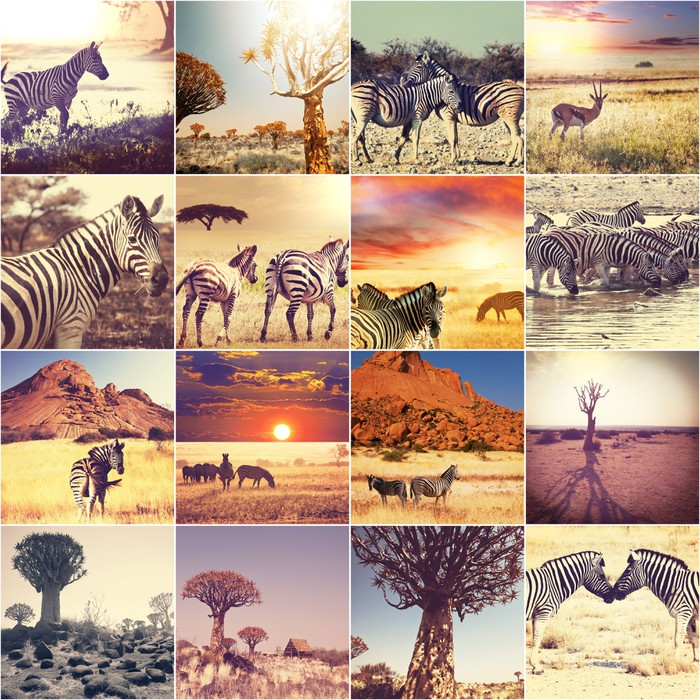 African safari Wall Mural Pixers We live to change