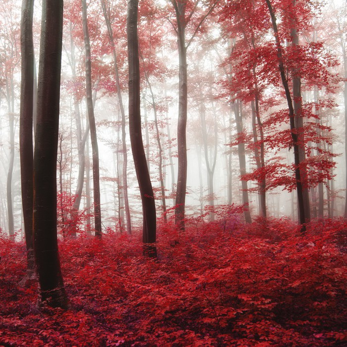 Glow light autumn forest wall mural pixers we live to for Autumn forest 216 wall mural