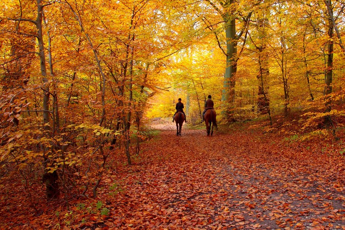 Riders in autumn forest Wall Mural Pixers We live to change