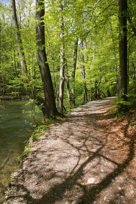 River Wuerm in spring, Starnberg area, Bavaria, Germany Wall Mural ...