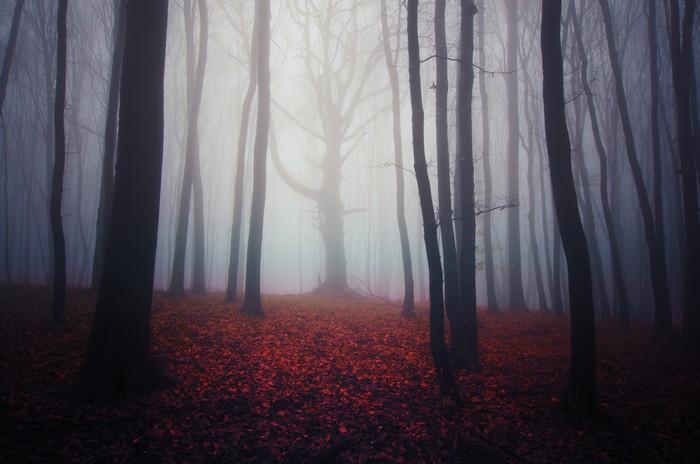 Vinylová Tapeta Misty lesní krajina s barevnými listy na zemi - Jiné