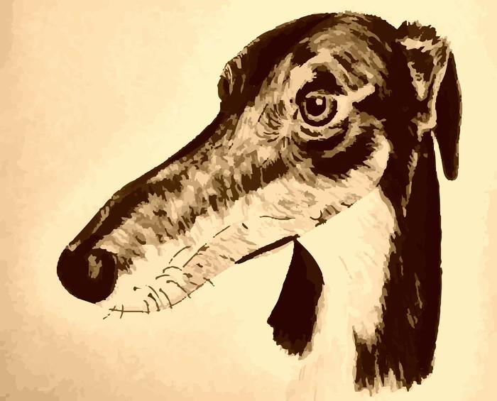 Vinyl-Fototapete Quirky handgezeichneten lurcher Originalvorlage - Traurigkeit