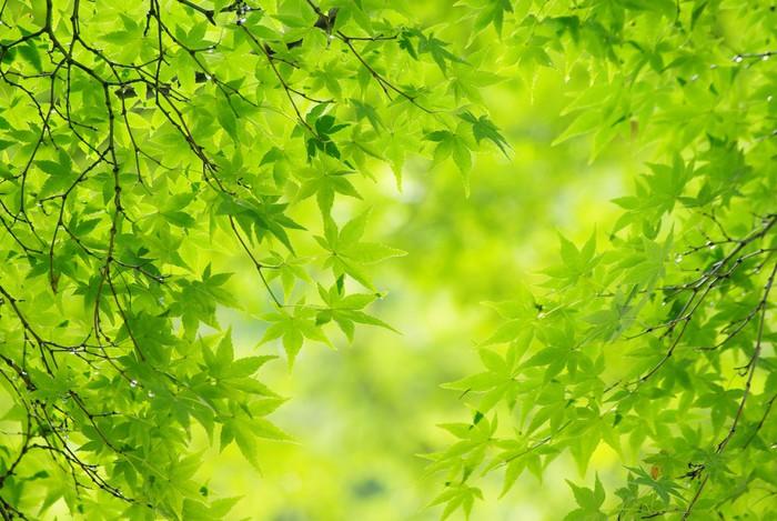 Vinylová Tapeta Listy čerstvé zelené - Témata