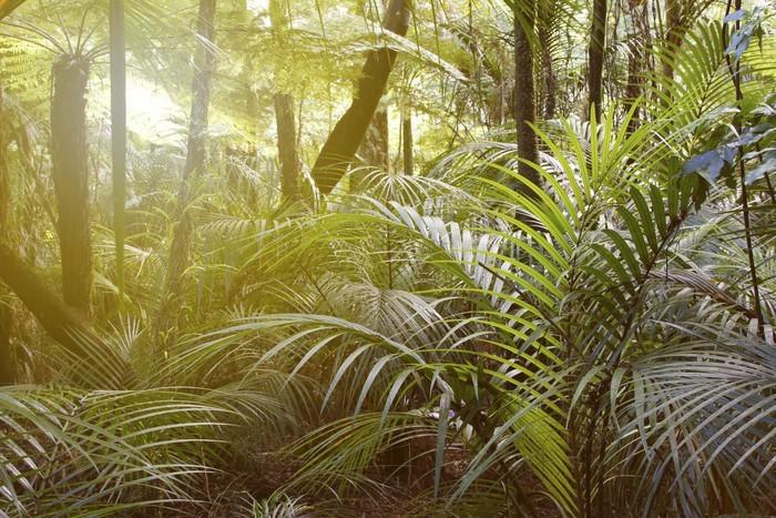 Vinylová Tapeta Forest Light - Lesy