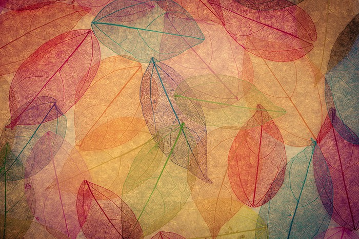 Vinylová Tapeta Podzimní pozadí - Témata