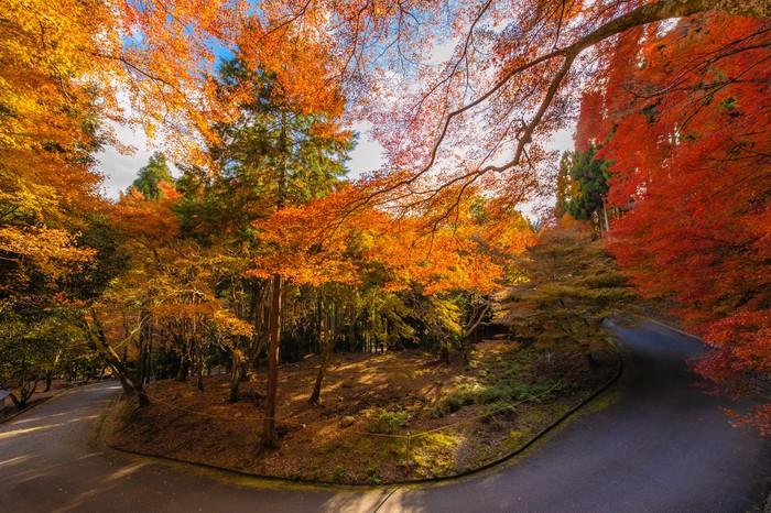Vinylová Tapeta Les s podzimní barvy - Asie