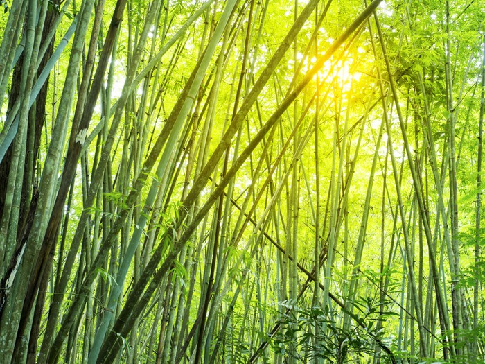 Bamboo forest in tropical wall mural pixers we live for Bamboo forest mural