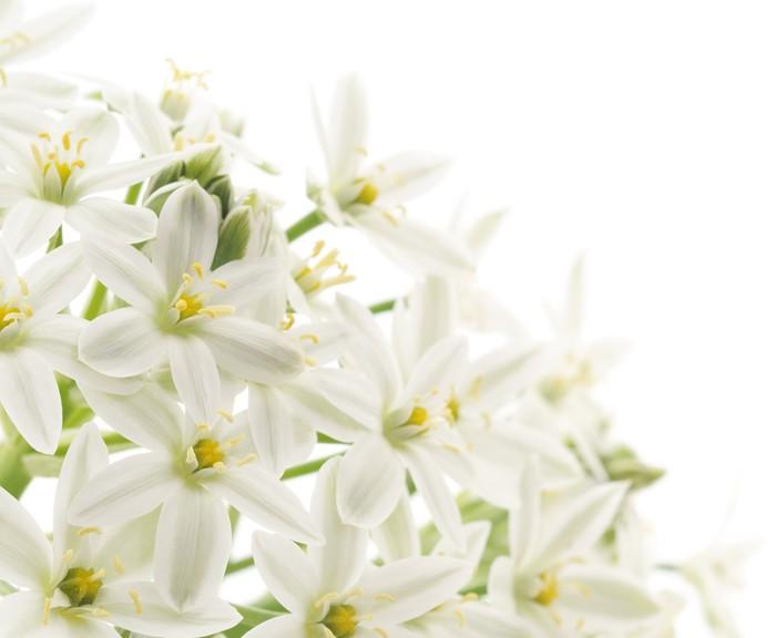 Fototapete Weiße Blumen Hintergrund • Pixers® - Wir leben, um zu ...
