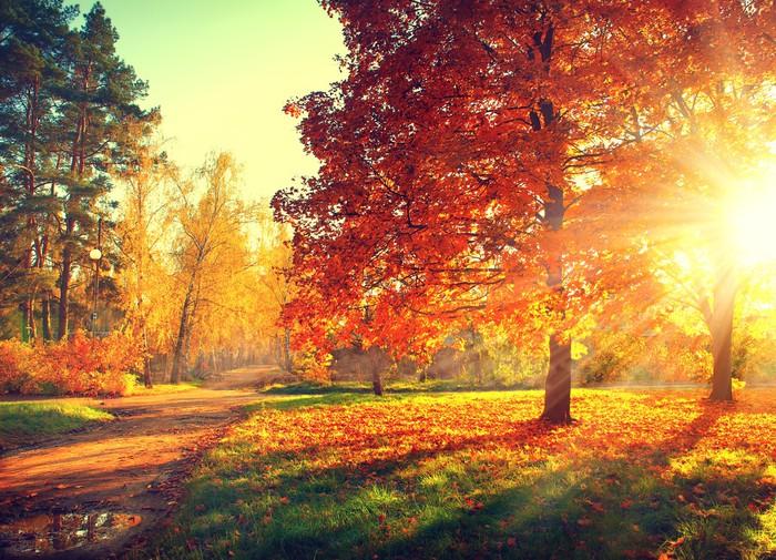 Syksyn kohtaus. fall. puita ja lehtiä auringonvalossa Vinyyli valokuvatapetti -