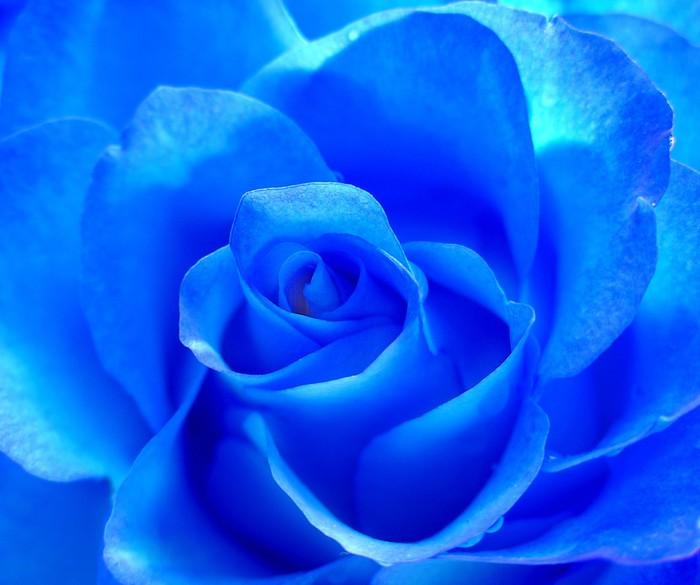 Carta da parati neon rose pixers viviamo per il for Carta da parati vinile