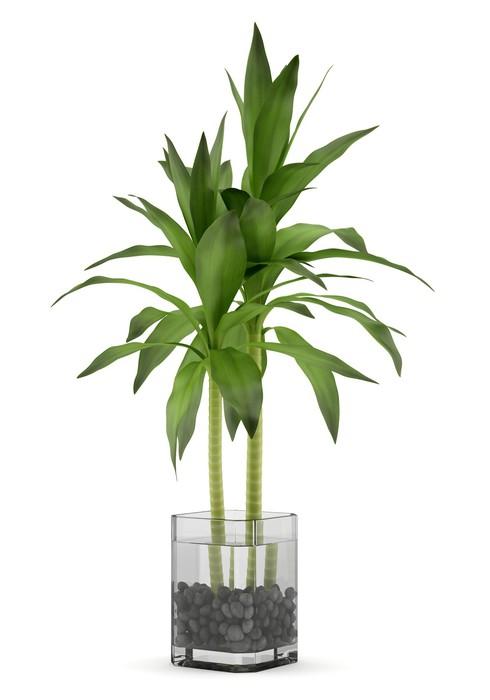 papier peint plante de bambou dans un vase isol sur fond blanc pixers nous vivons pour changer. Black Bedroom Furniture Sets. Home Design Ideas