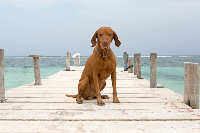 Plakát Pes sedí na molu v Mayské riviéře, Yucatan, Mexiko - Prázdniny