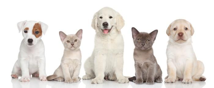 Nálepka Pixerstick Skupina kotě a štěňat - Savci