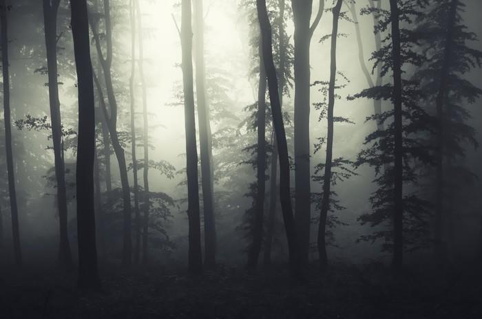 fototapete licht am rand eines dunklen wald mit nebel. Black Bedroom Furniture Sets. Home Design Ideas