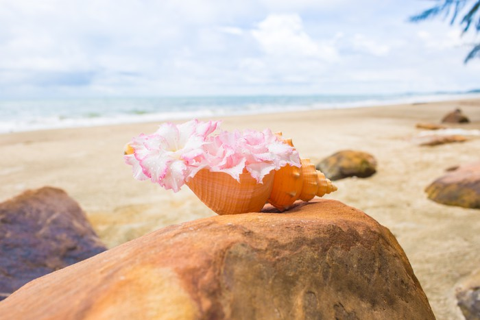 Flowers In Seashell Vase On The Rock With Seascape Background Wall