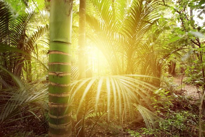 Papier Peint Vinyle Forêt lumière - Forêt