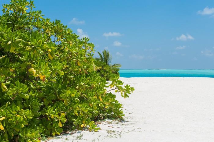 Vinylová Tapeta Krásný strom na bílé pláže a výhledem na oceán - Ostrovy