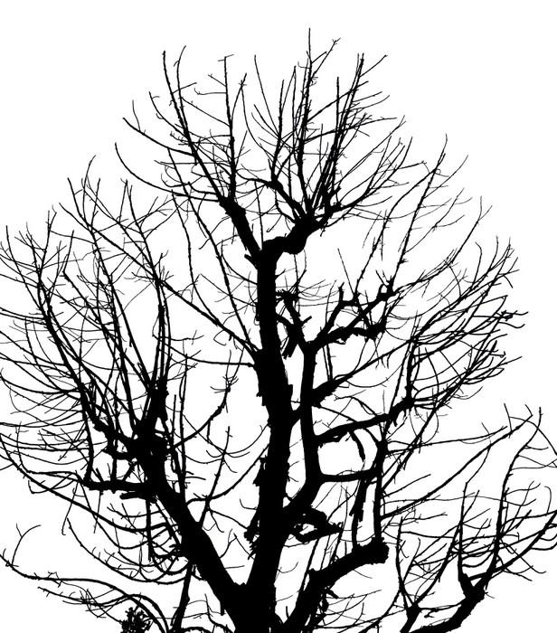 Vinylová Tapeta Silueta Mrtvý strom na izolované bílém pozadí - Úspěch