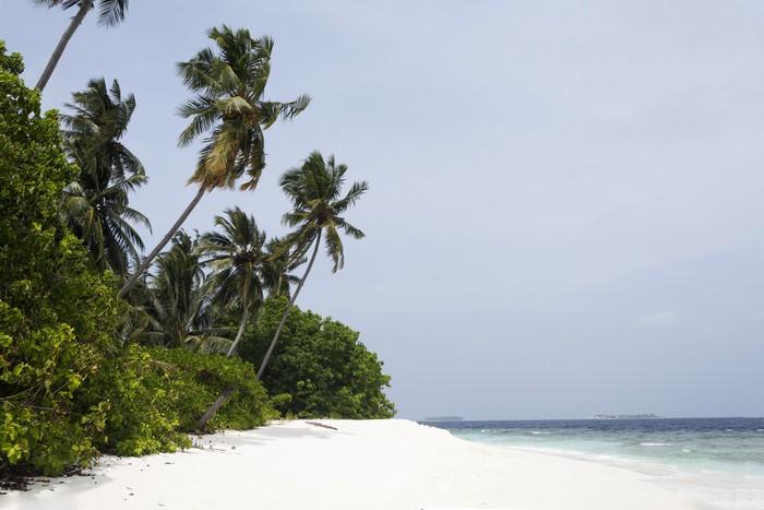 Vinylová Tapeta Tropický ostrov palm moře a nebe - Asie