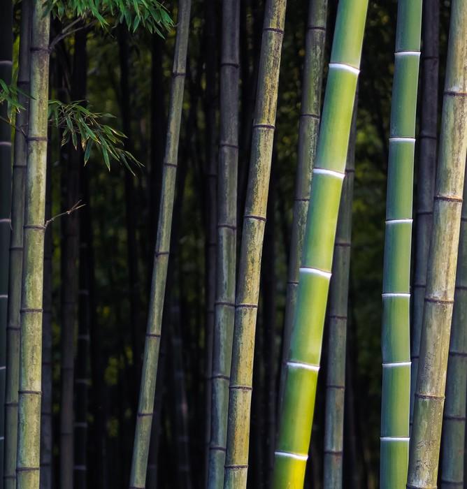 papier peint bamboo jungle la for t tropicale pixers nous vivons pour changer. Black Bedroom Furniture Sets. Home Design Ideas