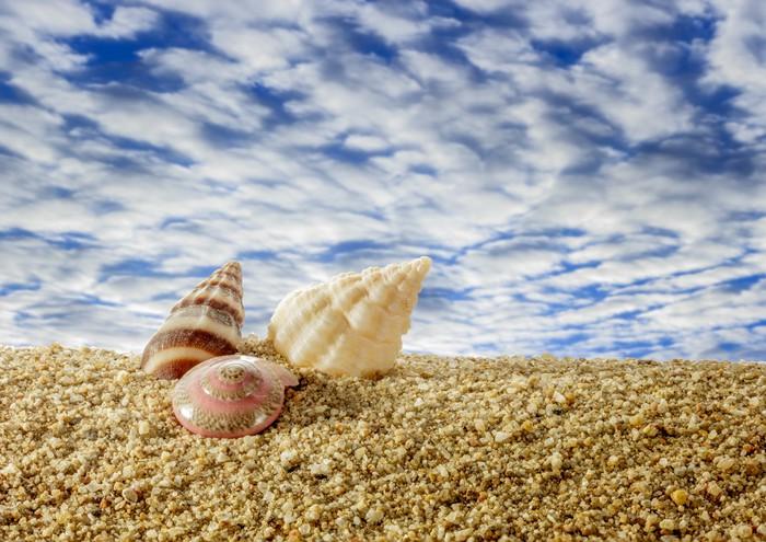 Vinylová fototapeta Mušle na písečné pláži s oblohou. - Vinylová fototapeta
