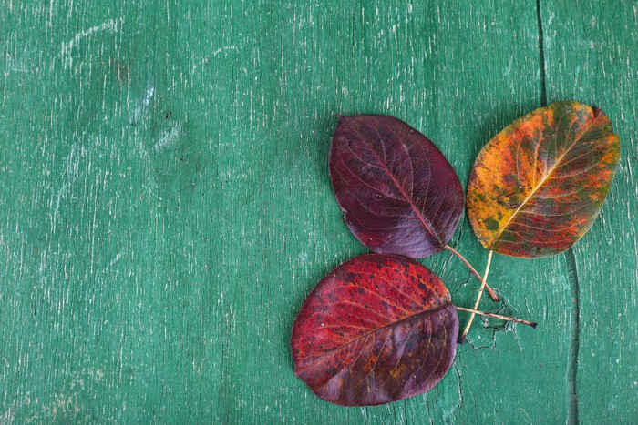 Vinylová Tapeta Tmavě červené listy na zeleném dřevěném pozadí - Značky a symboly