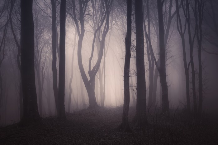 Dark Spooky Forest With Old Trees On Halloween Wall Mural