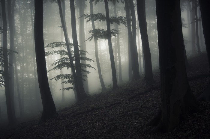 Enchanted Dark Forest At Night Vinyl Wall Mural