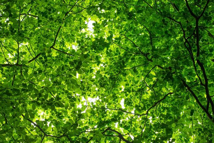 Vinylová Tapeta Subtropické lesy v Nepálu - Roční období