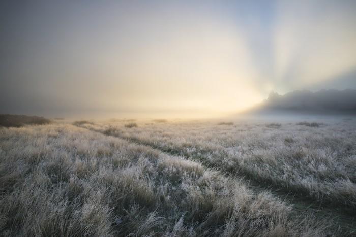 Nálepka Pixerstick Ohromující sluneční paprsky se rozsvítí mlhu, skrze hustou mlhu podzim Fall - Roční období