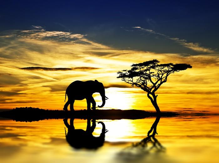 Vinylová Tapeta El elefante y la puesta de sol en el Lago - Voda