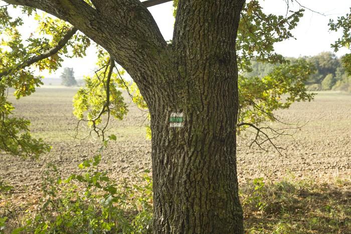 Vinylová Tapeta Turistická značka na kmen stromu - Evropa
