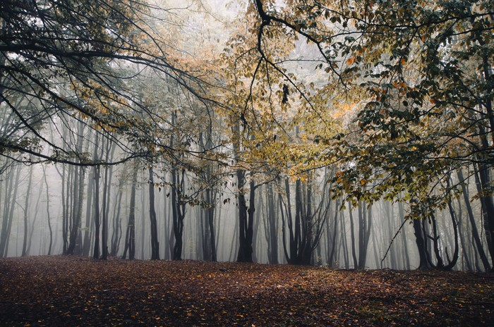 Autumn in foggy forest wall mural pixers we live to for Autumn forest mural