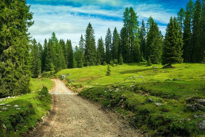 Vinylová Tapeta Krajina Itálie, Dolomity - borový les prohlídka - Outdoorové sporty