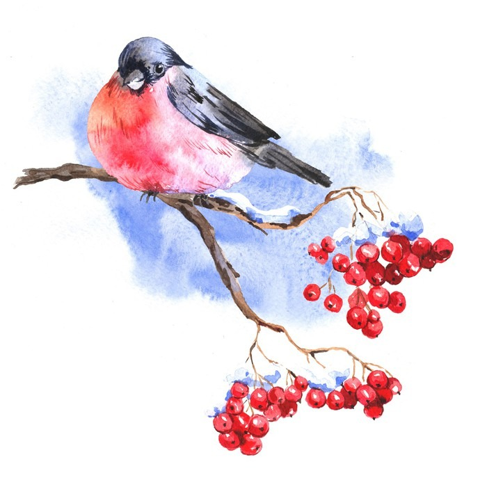 Obraz Na Plotnie Zima Akwarela Z Bullfinches