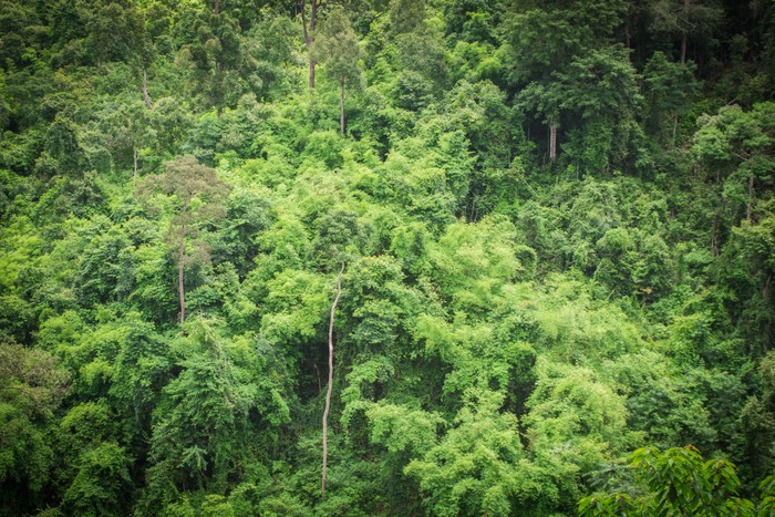 Vinylová Tapeta Lesní zelené stromy pozadí - Hory