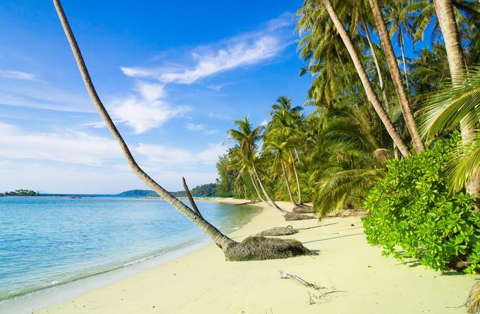 Vinylová Tapeta Coconut Coast Beautiful Beach - Příroda a divočina
