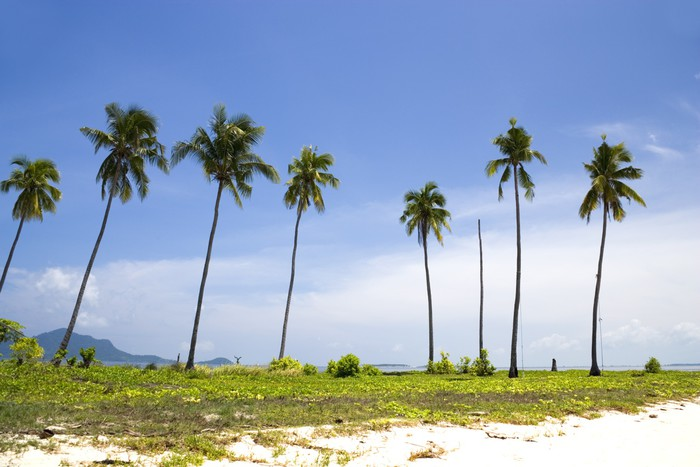 Vinylová Tapeta Island Kokosové Stromy - Asie
