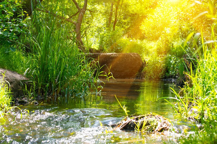 Fototapete tropischer regenwald  Fototapete Stream in den tropischen Regenwald • Pixers® - Wir leben ...