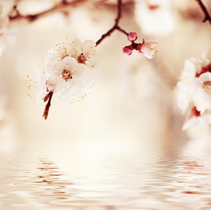 Vinylová Tapeta Apricot strom květina - Život